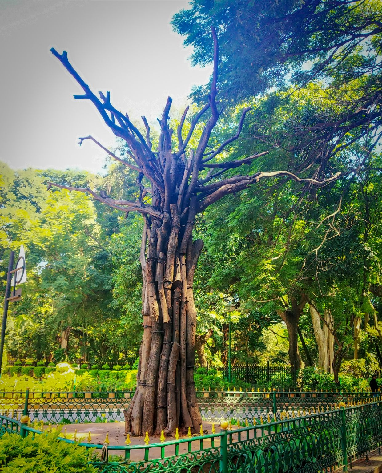 Photo of Cubbon Park By CS Anant Hegde