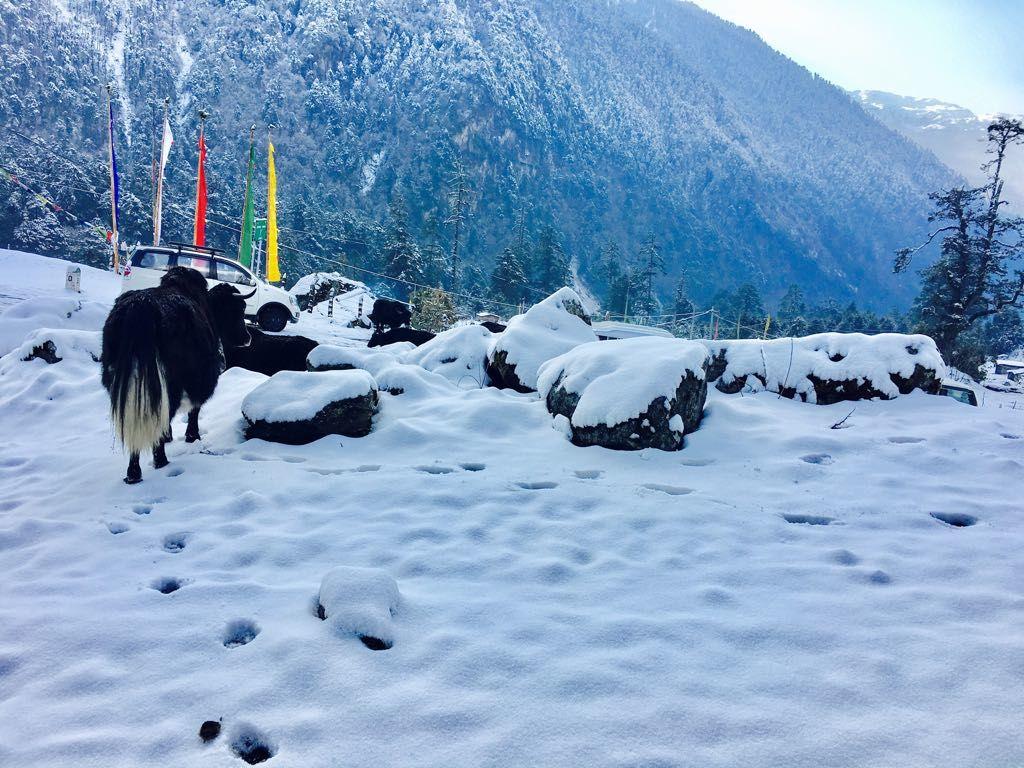 Photo of Sikkim By Suraiya Rahman
