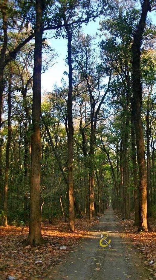 Photo of Jim Corbett National Park By Shruti Parthasarathy
