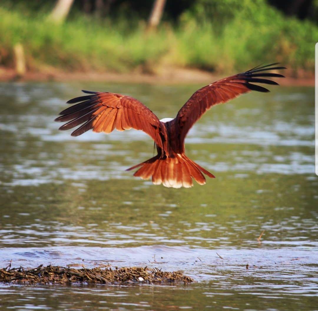 Photo of Kerala Backwaters By Gaurika Madan
