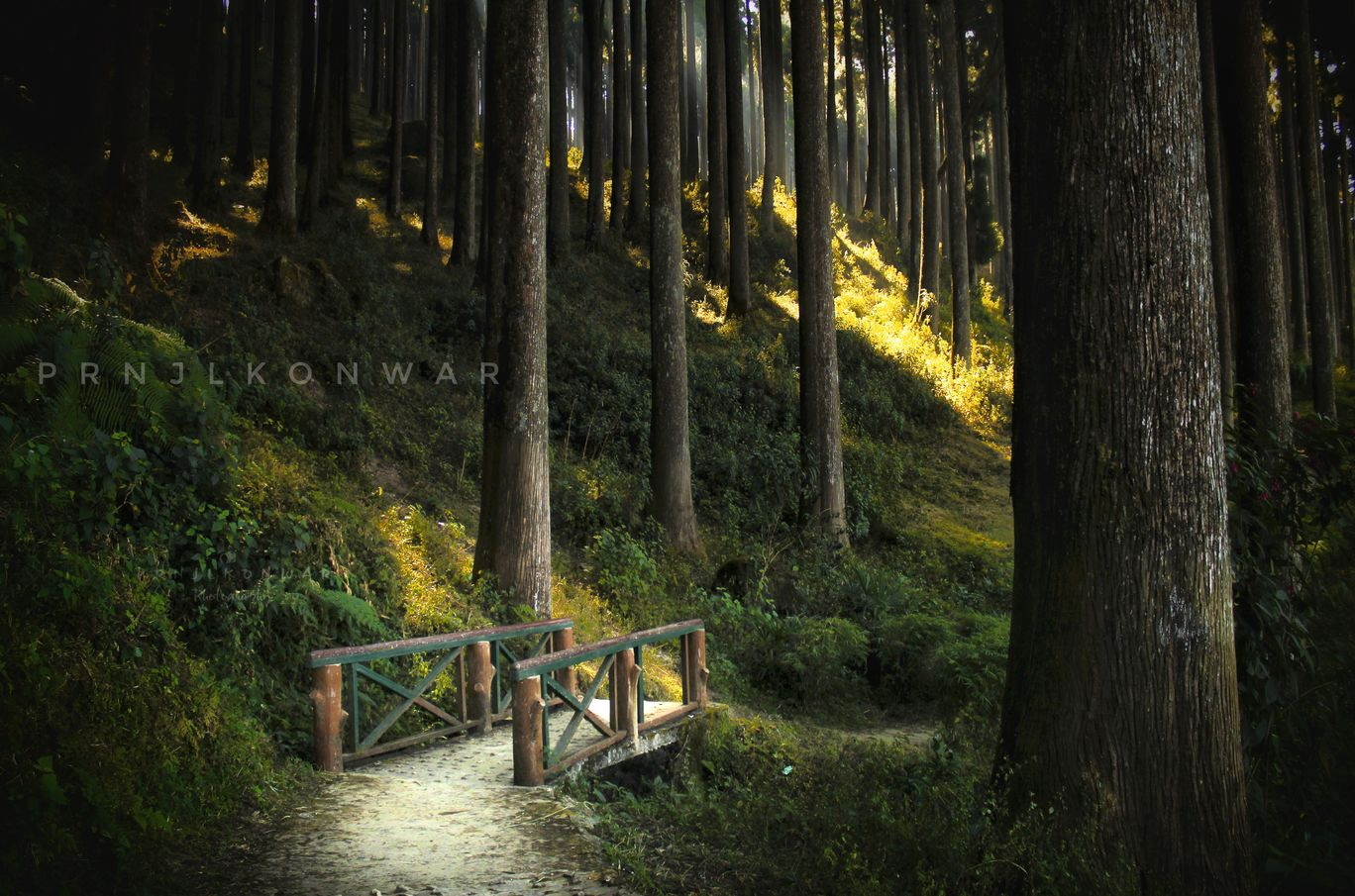 Photo of Lamahatta Park By Prnjl KoNwar