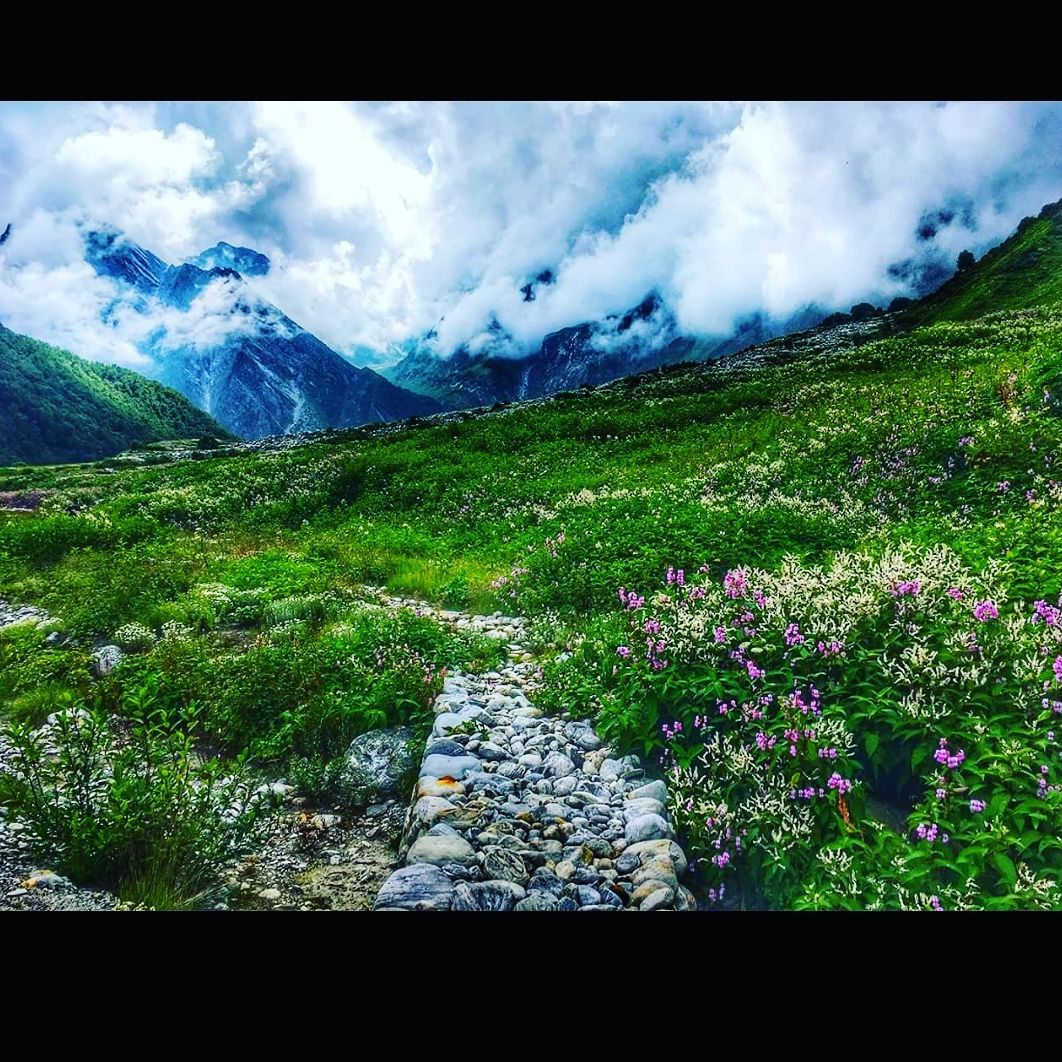 Photo of Valley of Flowers National Park By Vaibhav Gupta