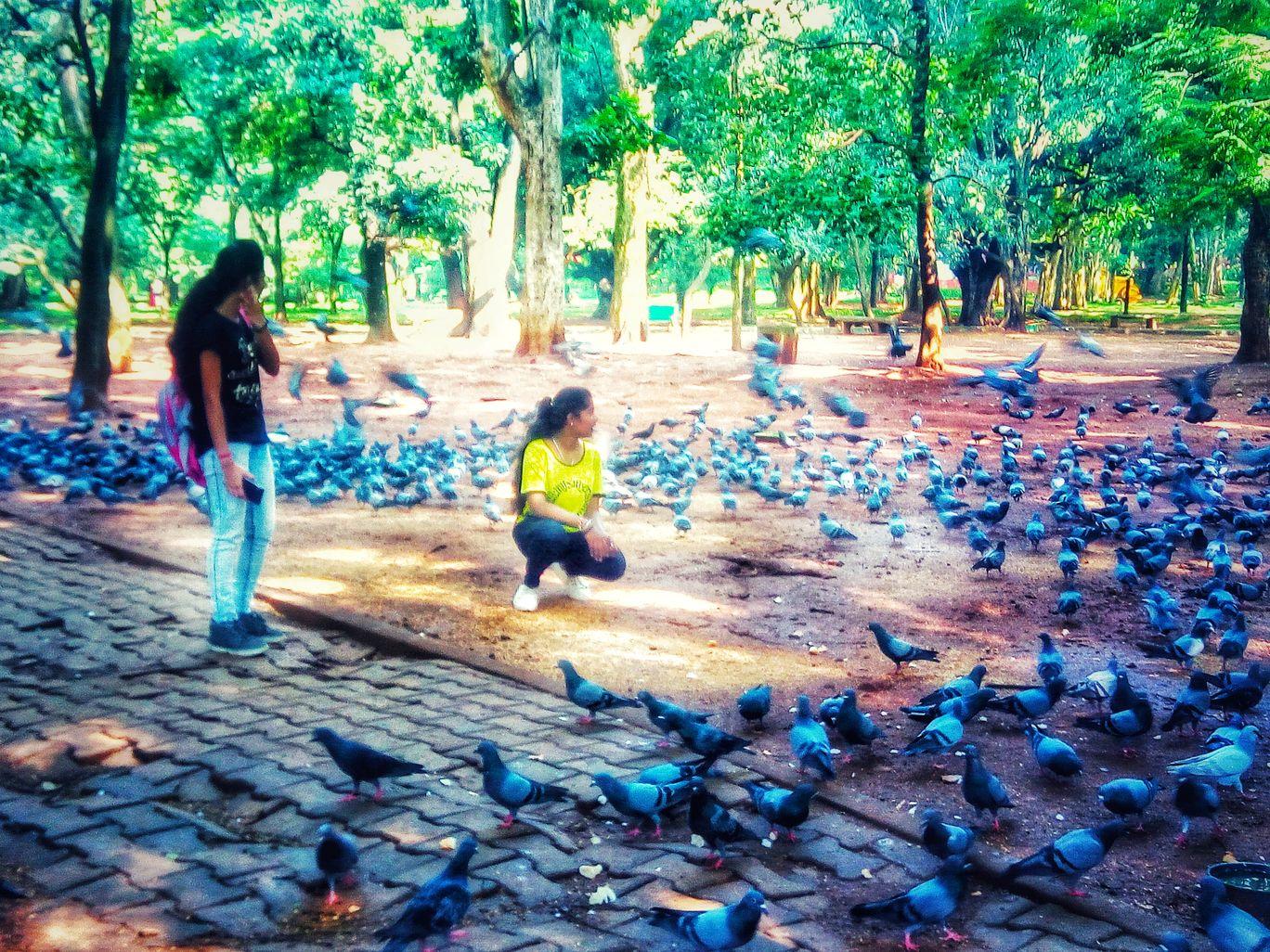 Photo of Cubbon Park By Sushma H R