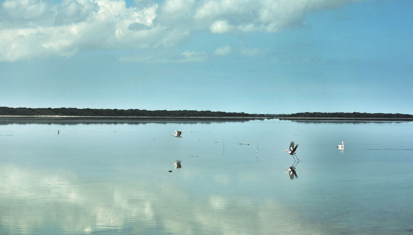 Photo of Pulicat Lake By Raaj Menneni