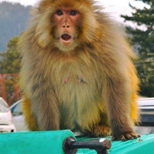 Photo of Jammu and Kashmir By Megha Bhaskar
