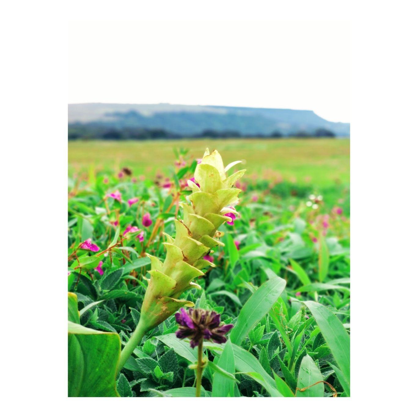 Photo of Kaas Plateau of Flowers By Jyoti Kaushik