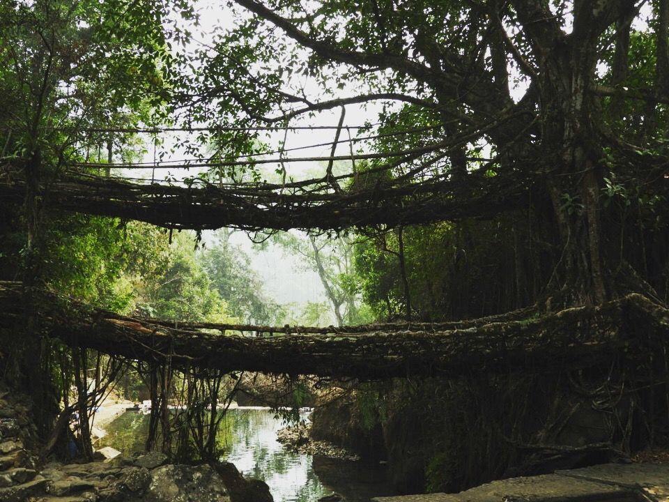 Photo of Double Root Bridge By Ami