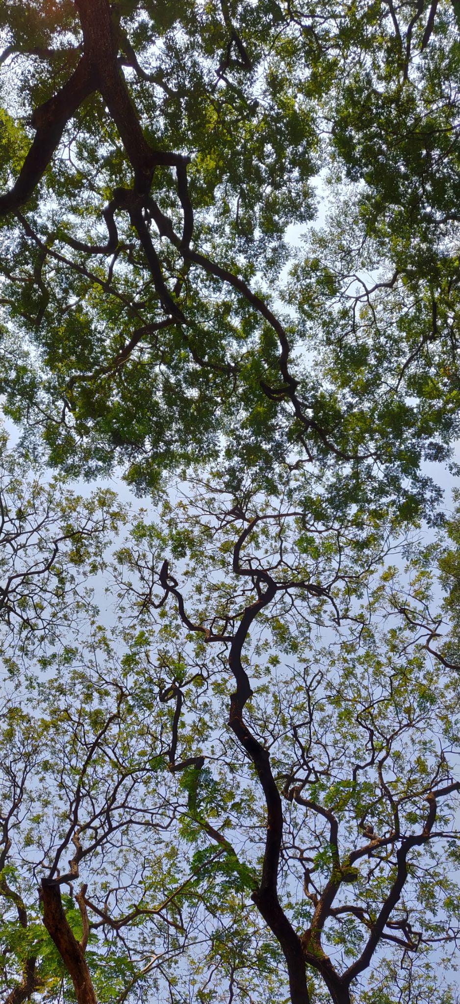 Photo of Maharashtra By Jyoti Rani