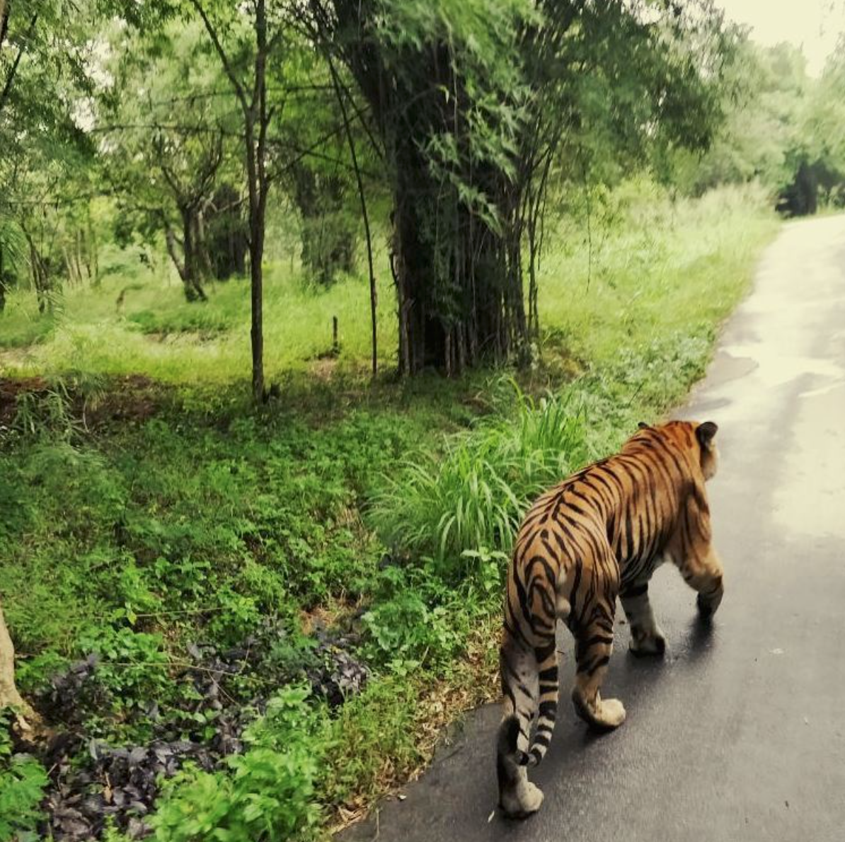 Photo of Bannerughatta National Park By RIDDHI MISHRA