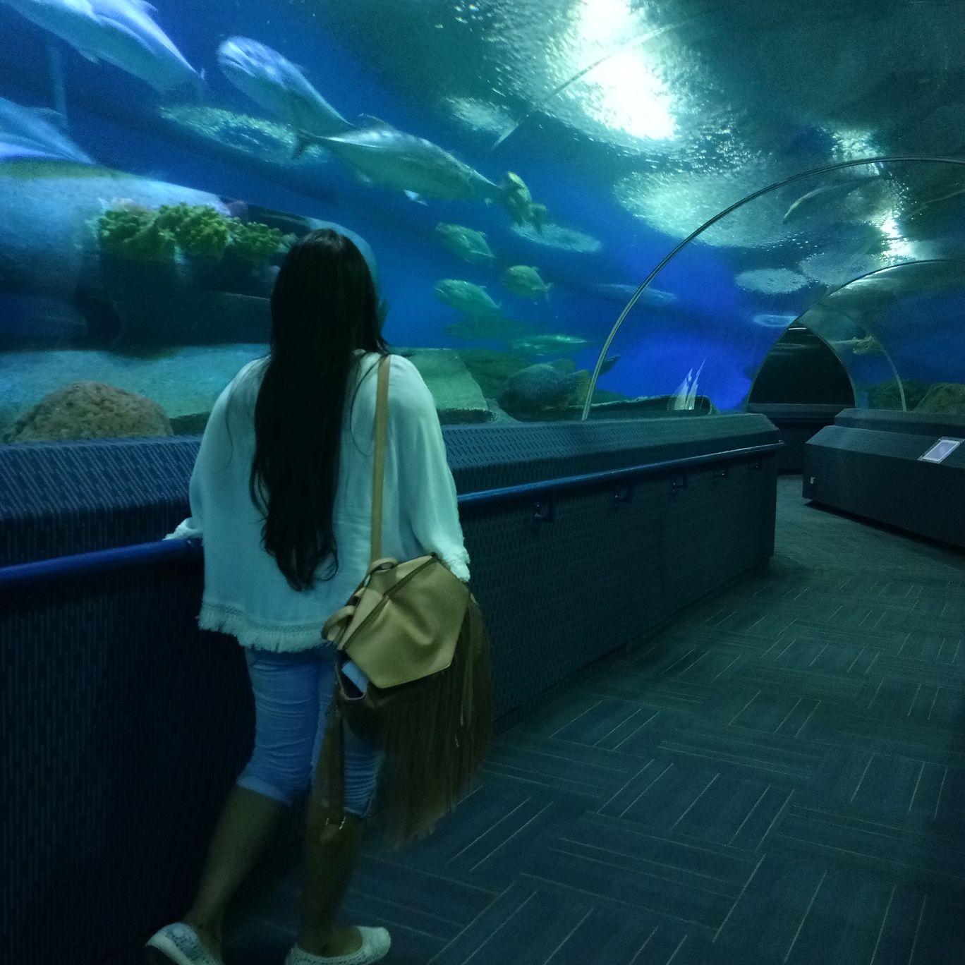 Photo of Underwater World Pattaya By Divya Rani Singh