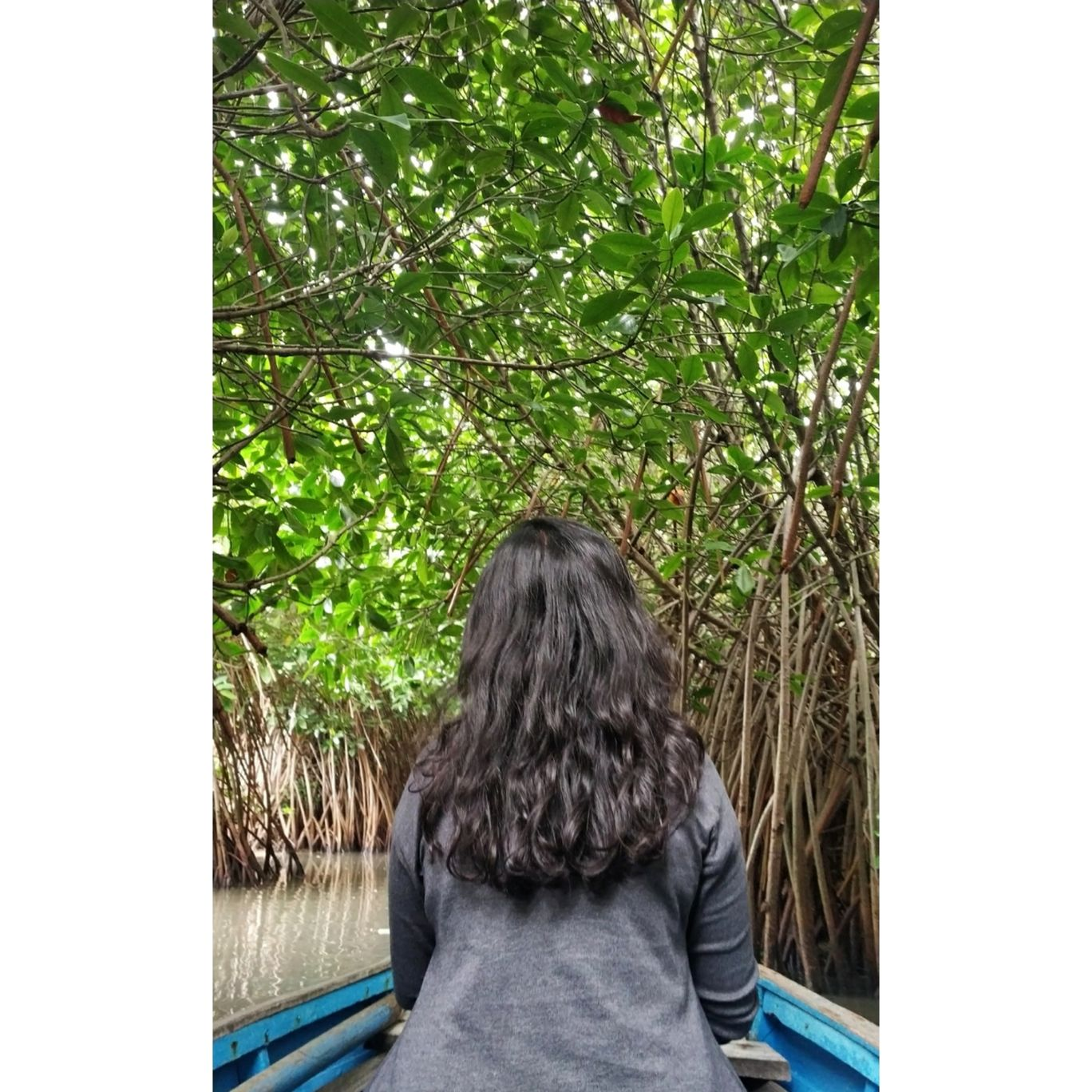 Photo of Pichavaram Mangrove Forest By Surbhi Madavi