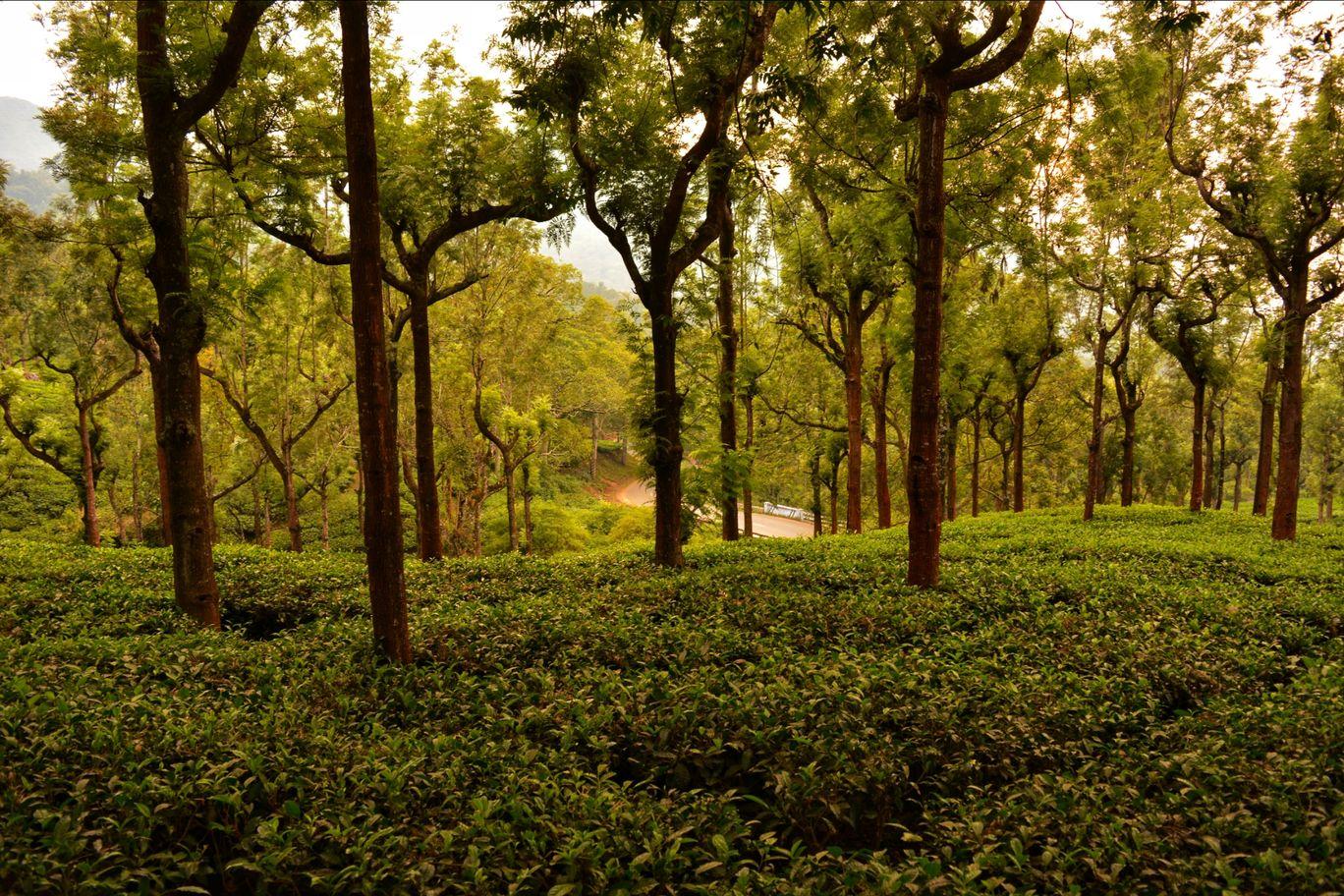 Photo of Ooty By Kiran Sharma