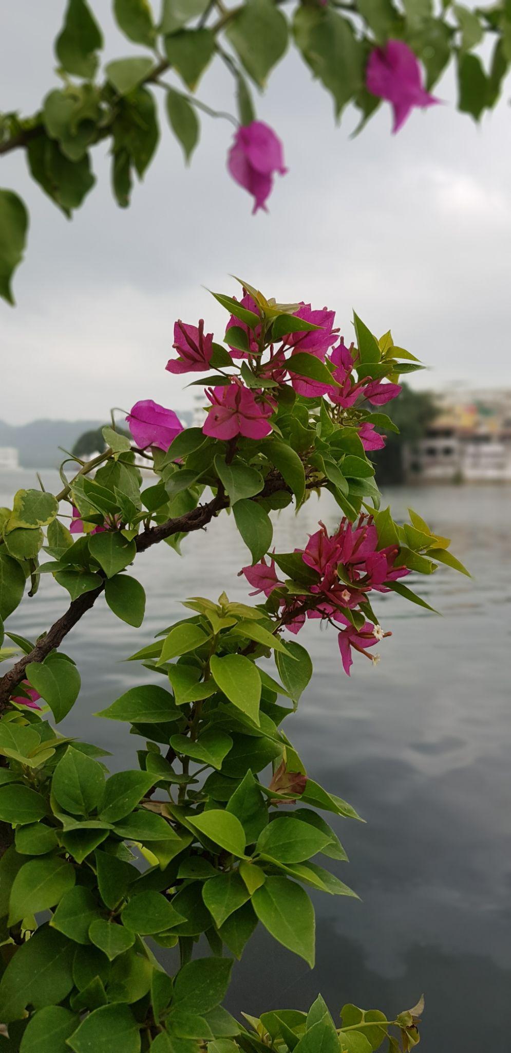 Photo of Udaipur By Nidhi Choudhary
