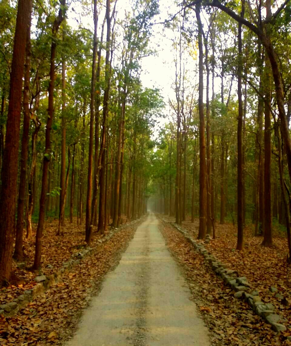 Photo of Jim Corbett National Park By Meenakshi Sethi