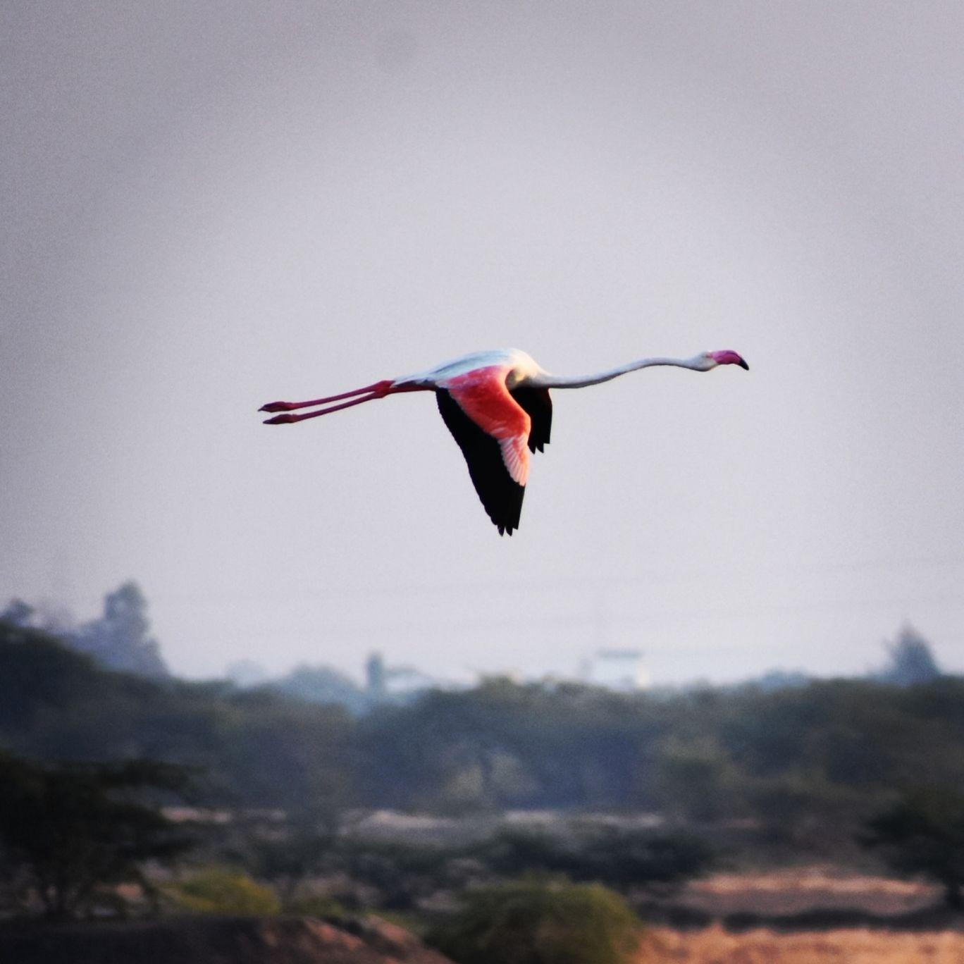 Photo of Khijadia Bird Sanctuary By Divyanshu Bhatia