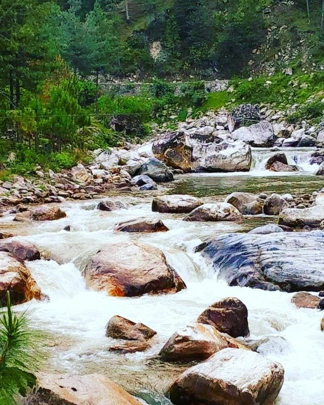 Photo of Jalori Pass By sapna tiwari
