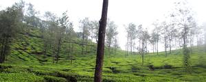 Thekkady Travel Trails