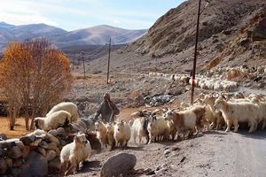 Postcards from Ladakh