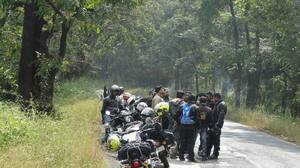 Dandeli Forest with Road Stallion