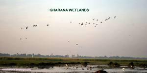 Gharana wetlands