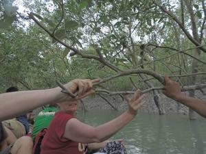 Sunderbans: The Indian Amazon