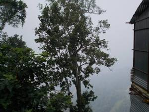 Trip to beat the heat - I (Amazing Uttarakhand)