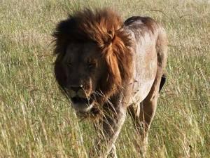 africa kenya safaris by www.spottedsafaris.com