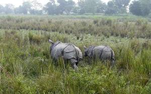 North-East Diaries- Kaziranga National Park