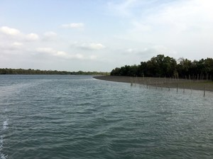 Sunderbans - beyond the Bengal tiger