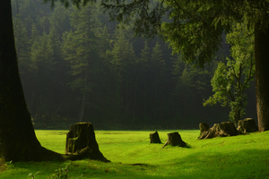 Khajjiar & Jot : Refresh your memories with beautiful pictures.
