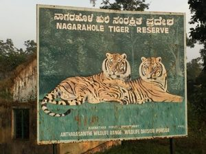 India: Safari - You Don't See Tiger, Tiger Sees You - Can Travel Will Travel