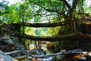 The North East trail: The Route to the Root bridges