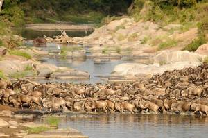 The Wonder of  Maasai Mara(The Value of Exeperience)