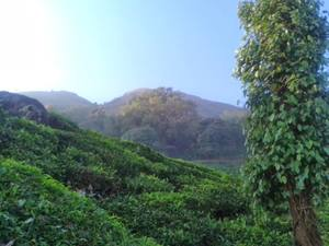 A cool day with nature at Chembra, Wayanad