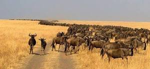 3 days Masai Mara kenya best adventure safari