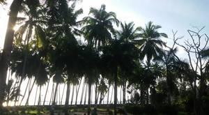 Serene yet Catchy- Andaman and Nicobar Islands.