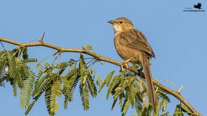 Bird-Watching At Little Rann of Kutch And Thol Bird Sanctuary