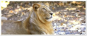 Gir National Park, India