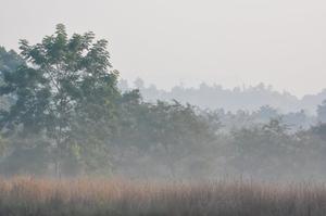 Valmiki Tiger Reserve (VTR)