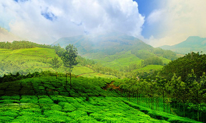 Trip to God's own country... Wayanad