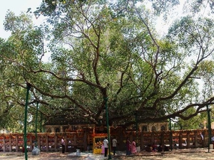 Visiting the Great Bodhi Tree