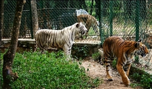 Road trip to safari – Bannerghatta Biological Park