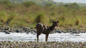 A Photographer's Travel Tales at Corbett National