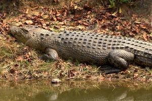 Bhitarkanika Trip – Bikers, Crocodiles & The Olive Ridley Turtles
