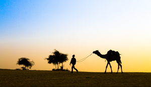 The Tale Of A Rajasthani