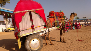 Embracing The Pushkar Vibe