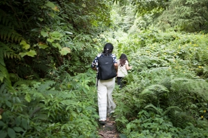 A trek through the whistling woods