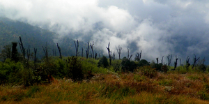 Into a land less traveled: Trekking Through Maenam Wildlife Sanctuary, Sikkim