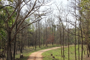 A Jungle Treat : Pench National Park