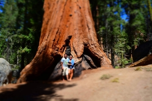 Our favourite five national parks in the Western USA